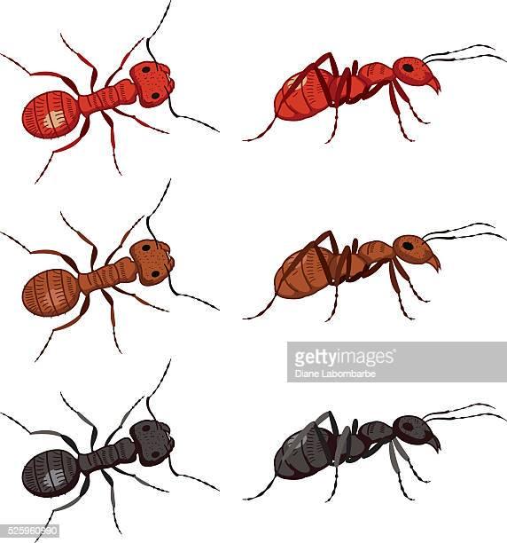 ilustraciones, imágenes clip art, dibujos animados e iconos de stock de conjunto de dibujos animados lindo hormigas - hormiga