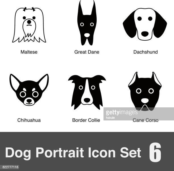 Ilustraciones De Stock Y Dibujos De Chihuahua