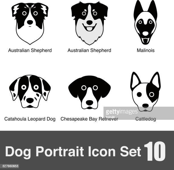 set of cute dog face icons, vector illustration - australian shepherd dogs stock illustrations