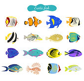 Set of cute exotic fishes on white background.