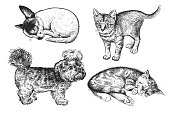 Set of cute puppies and kittens. Hand-made black and white drawing of Dogs and cats