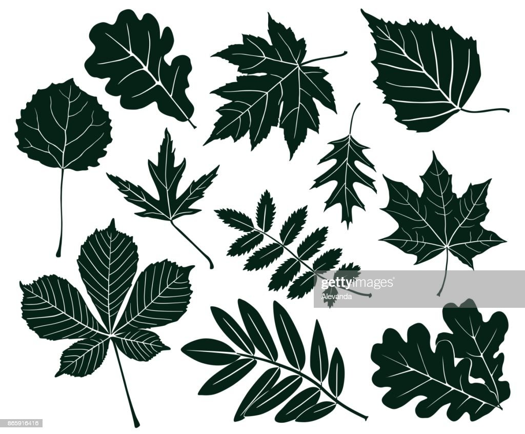 Set of dark silhouettes of leaves of various shapes. Vector illustration