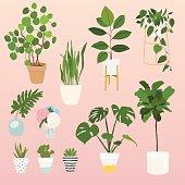 Set of decorative house plants.