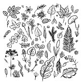 set of different leaves and branches drawn in the style of children's drawing fast by hand