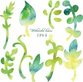 set of different leaves by watercolor