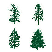 Set of different silhouettes of green pine trees, vector illustration. Collection of vintage textured grunge fir trees design template. Vector illustration.