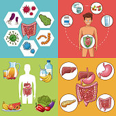 Set of digestive system cards