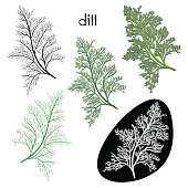 Set of dill  isolated on white background.
