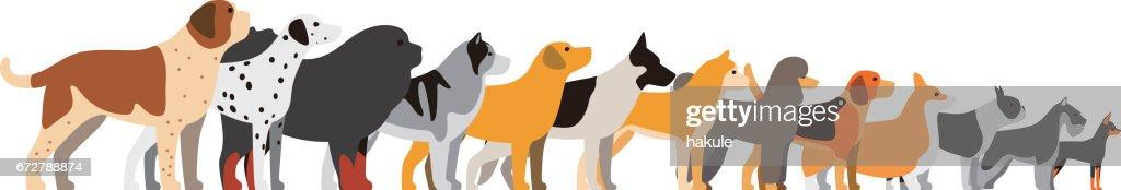 set of dog breeds, side view, vector illustration : stock illustration
