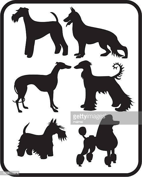 ilustraciones, imágenes clip art, dibujos animados e iconos de stock de conjunto de siluetas de perros - galgo