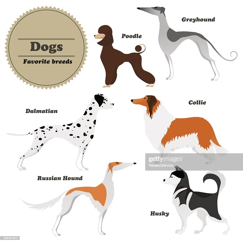 Set of dogs Greyhound, Russian hound, Husky, Poodle, Dalmatian, Collie.