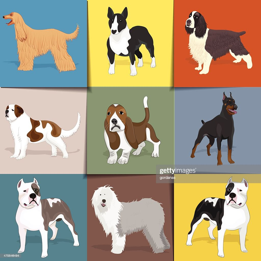 Set of dogs with square background.