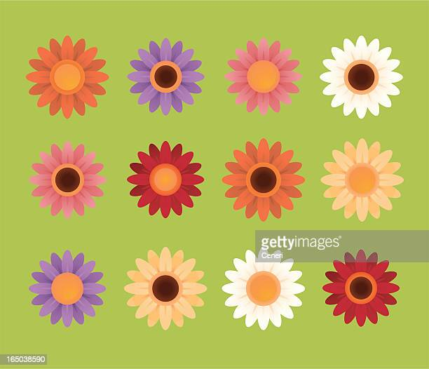 set of drawings of colorful daisies - gerbera daisy stock illustrations, clip art, cartoons, & icons