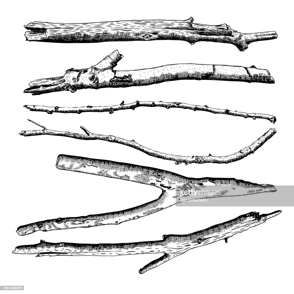 Set of Driftwood, ground floor hand drawn ink rustic design elements collection. Dry tree branches and wooden twigs. Vintage highly detailed classic ink drawings bundle art in engraved style. Vector.