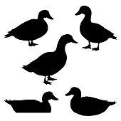 Set of ducks silhouettes