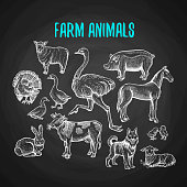 Set of farm animals in chalk style on blackboard