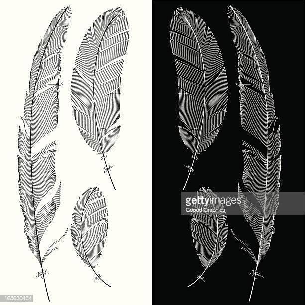 ilustraciones, imágenes clip art, dibujos animados e iconos de stock de juego de feathers - plumadeescribir