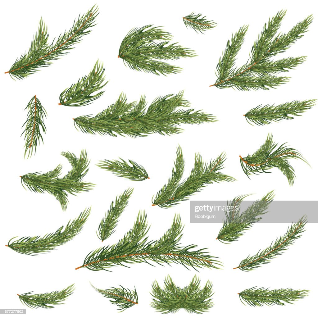 Set of Fir Branches. Christmas Tree.