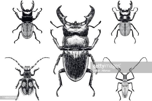 set of five drawings of insects, among them stag beetle on white background - beetle stock illustrations