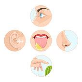 Set of five senses man. Anatomy, human organs