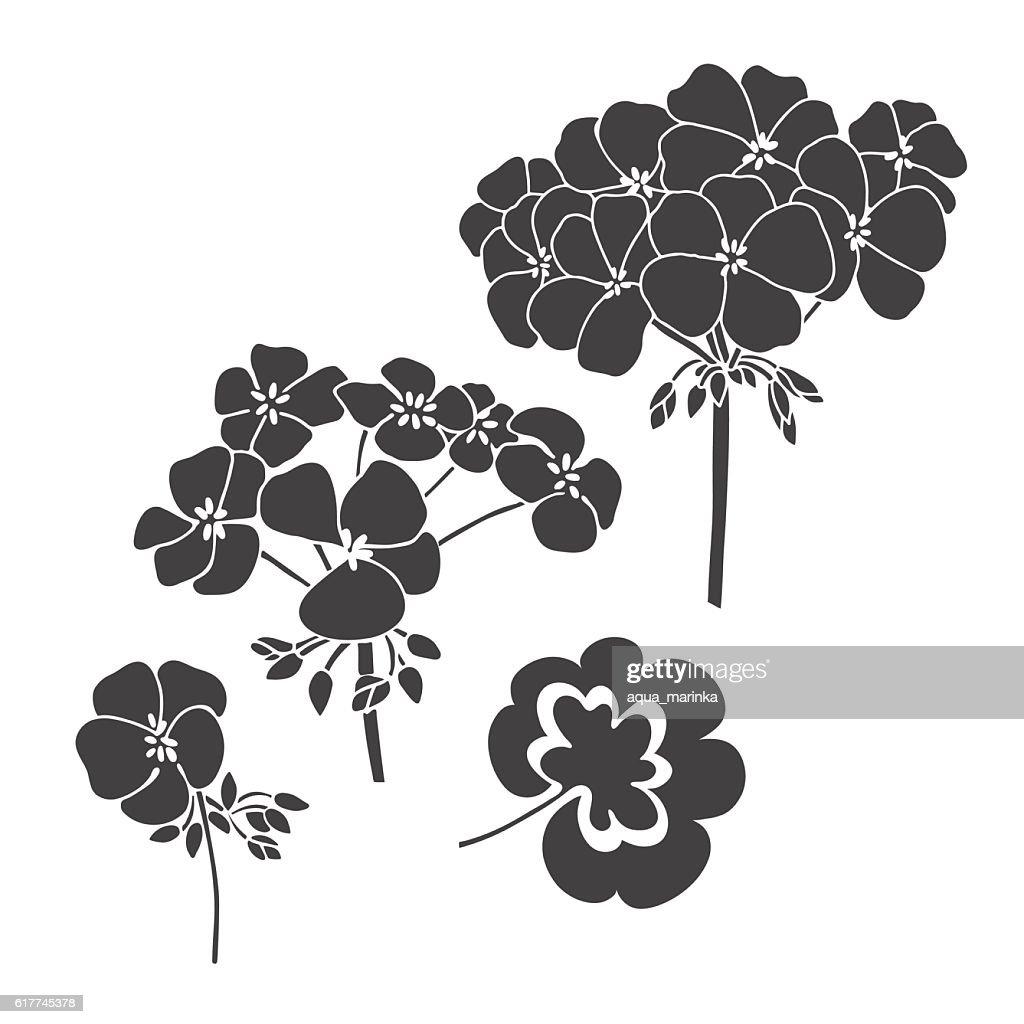 Set of  flowers geranium  isolated on white background.