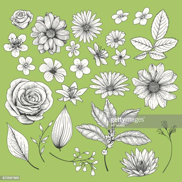 set of flowers - rosa stock illustrations