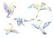 set of flying swans in watercolor. Hand drawn elements
