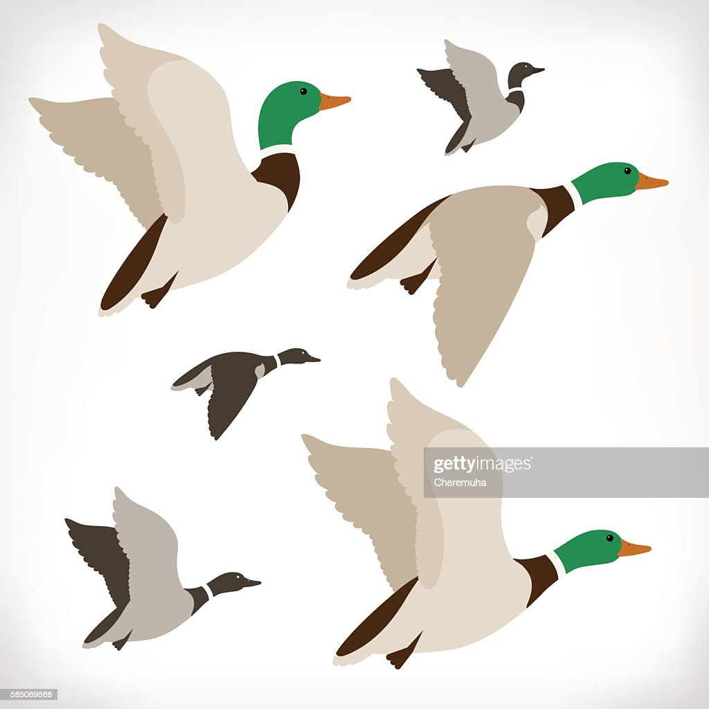 Set of flying wild ducks