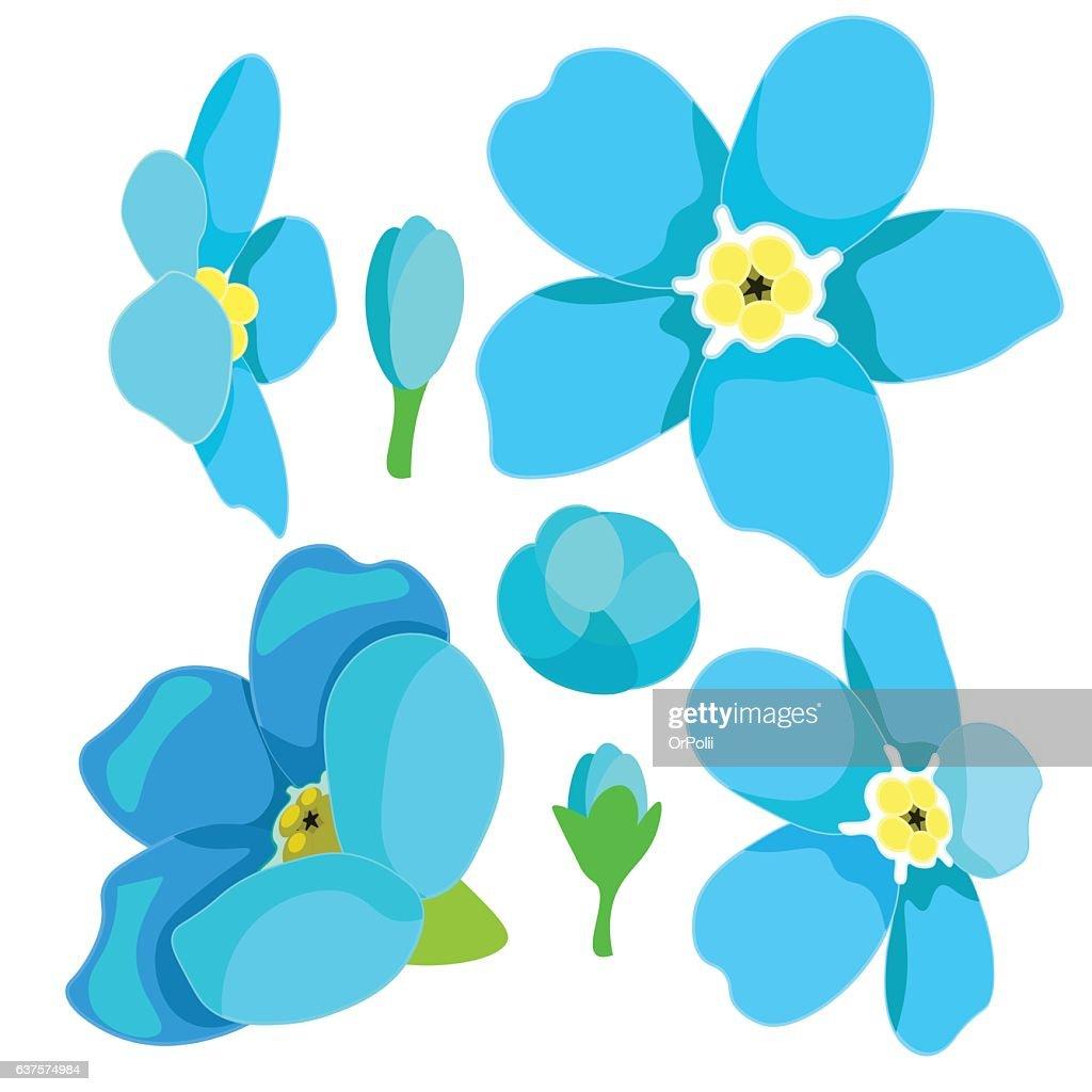 set of forget-me-alpine a wild flower. vector illustration