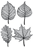 Set of four black and white decorative leaves. Vector template.