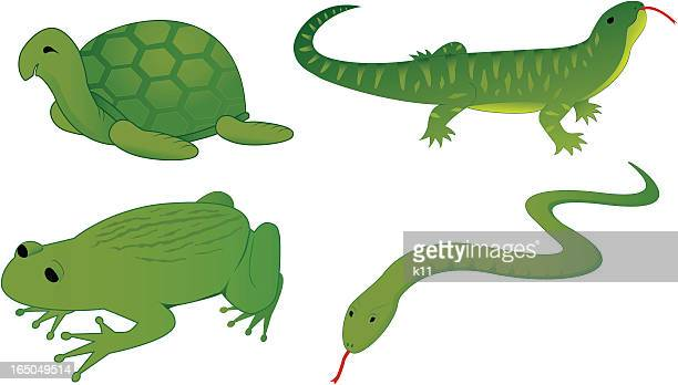 set of four reptiles - animal scale stock illustrations, clip art, cartoons, & icons