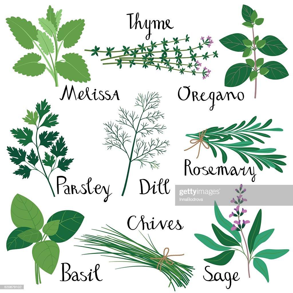 Set of fresh herbs.