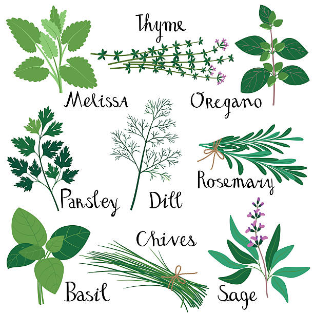 Set Of Fresh Herbs. Wall Art