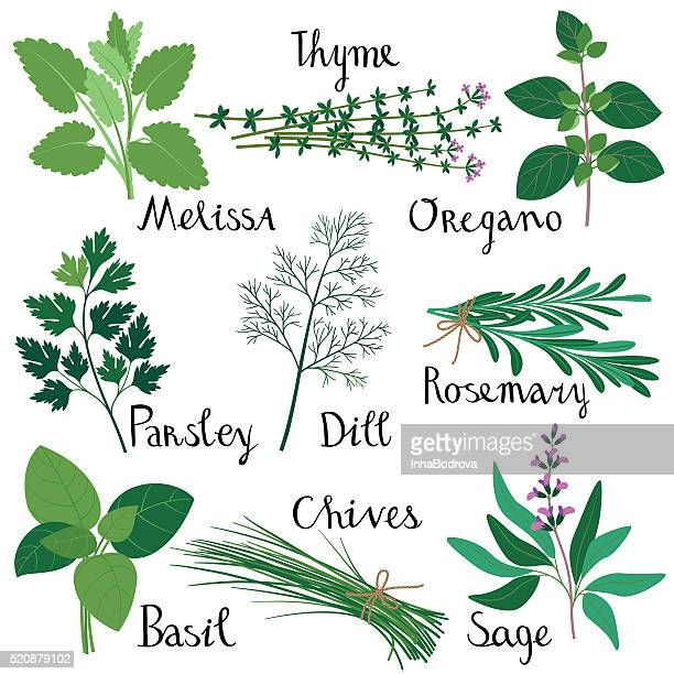 60 Top Herbal Medicine Stock Illustrations, Clip art