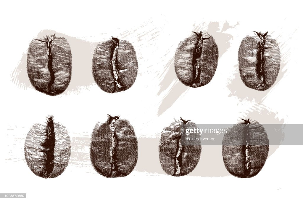 Set of gravure coffee beans on white background.