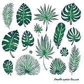 Set of green doodle exotic palm leaves and plants on a white background