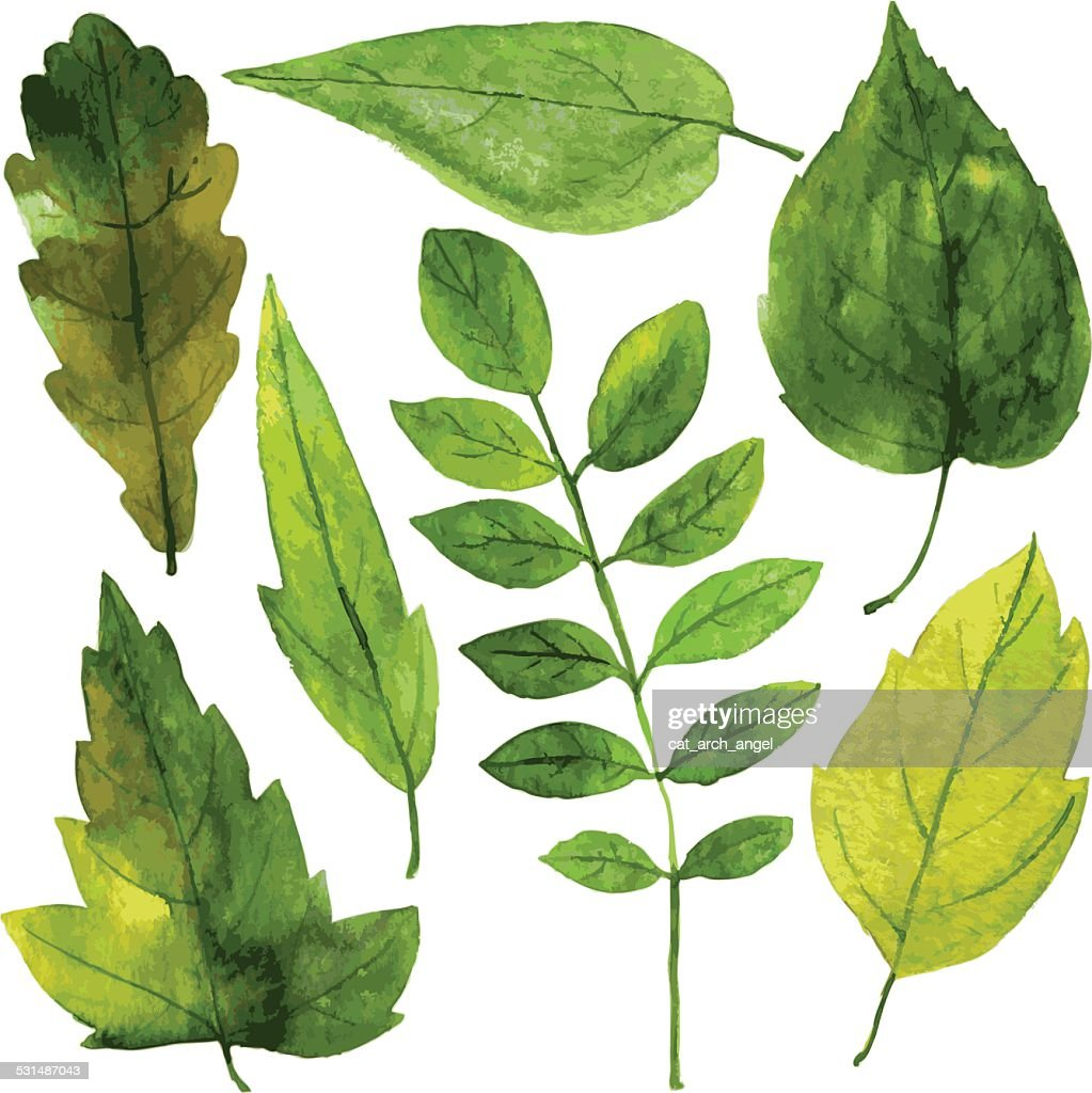 set of green leaves in watercolor