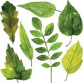 set of green leaves in watercolor
