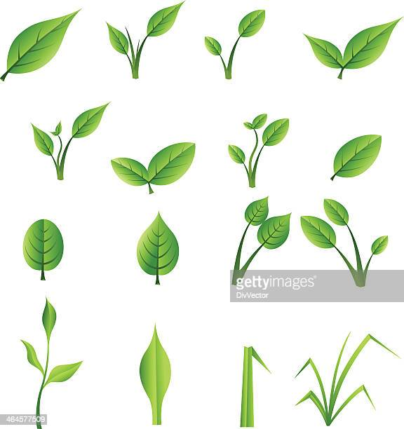 set of green leaves - plant stem stock illustrations, clip art, cartoons, & icons