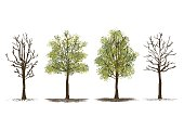 set of green trees and dead trees, vector illustration on white