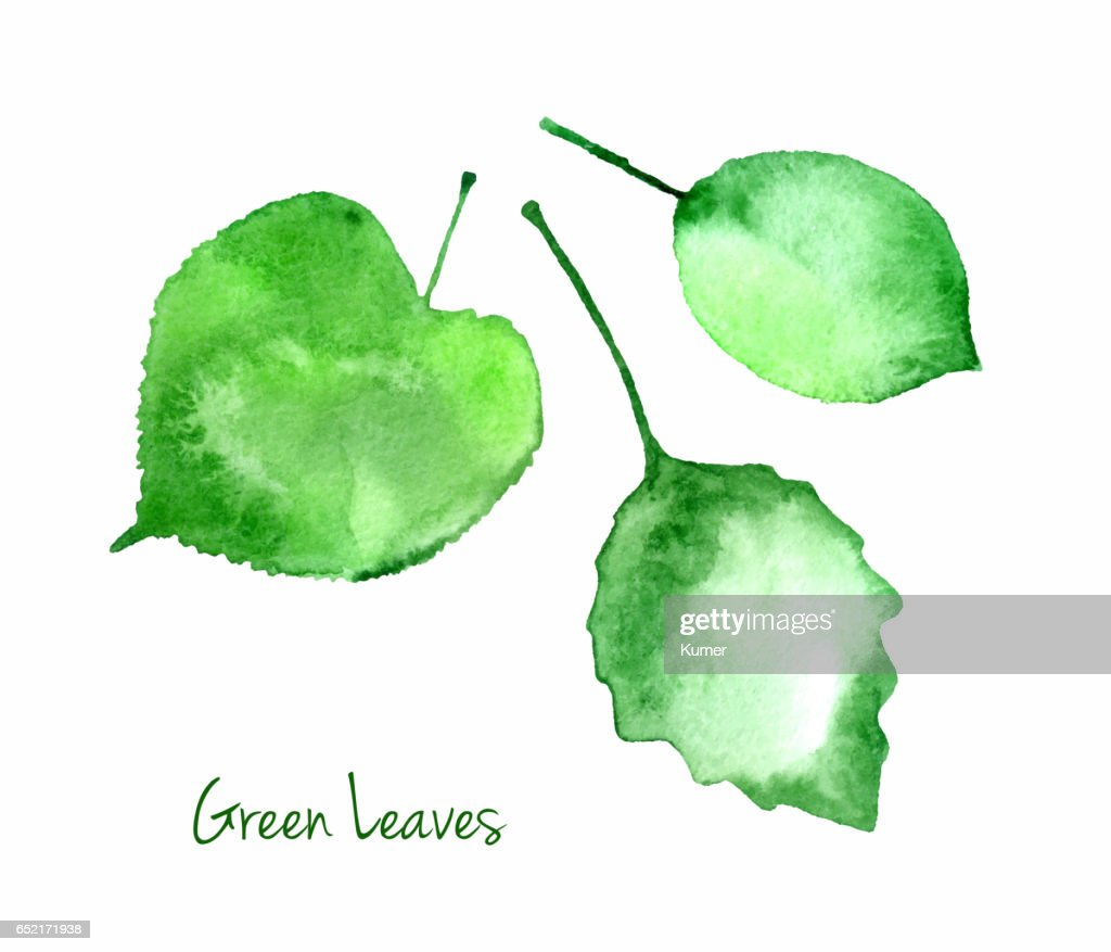 Set of green vector watercolor leaves for you eco design.