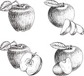 Set of hand drawn apple. Vintage sketch style illustration. Organic