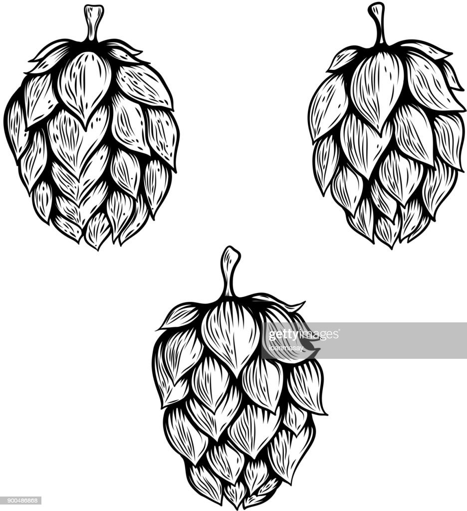 Set of hand drawn beer hop illustrations. Design element for label, emblem, sign.