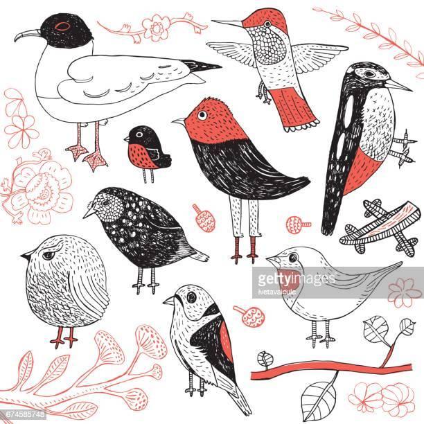 Ein Satz von handgezeichnet Vögel