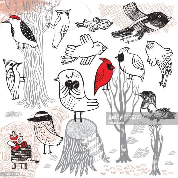 set of hand drawn birds - magpie stock illustrations