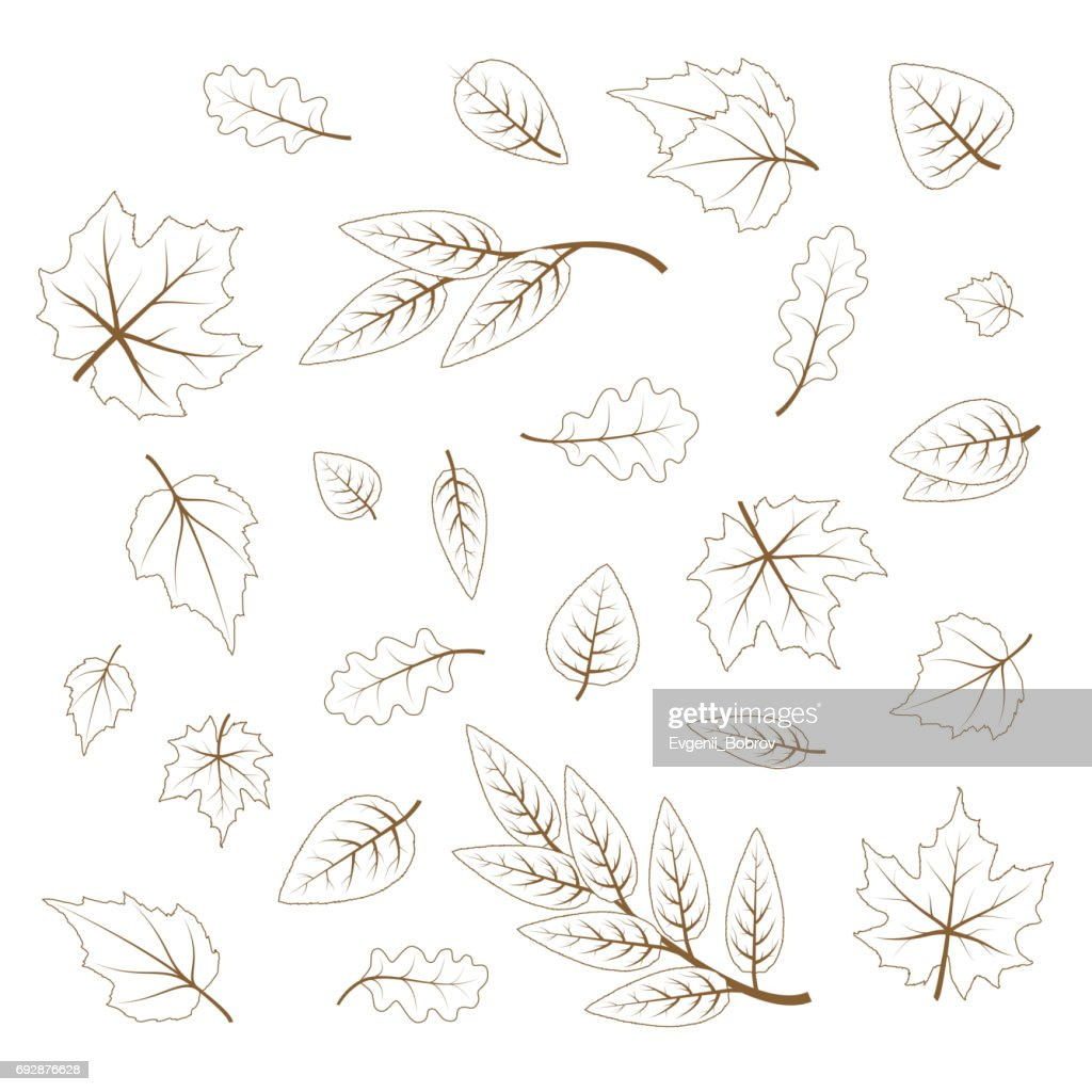 Set of hand drawn cute leaves from different kind of trees isolated on white