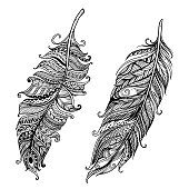 Set of Hand drawn doodle stylized feathers vector collection.