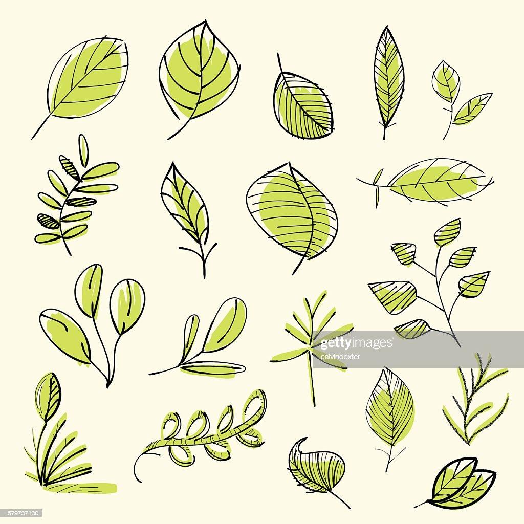 Set of hand drawn leaves