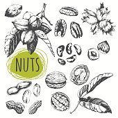 Set of hand drawn nuts. Black and white sketch food.