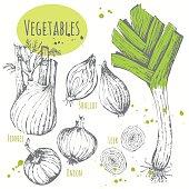 Set of hand drawn onion, leek, fennel, shallots.